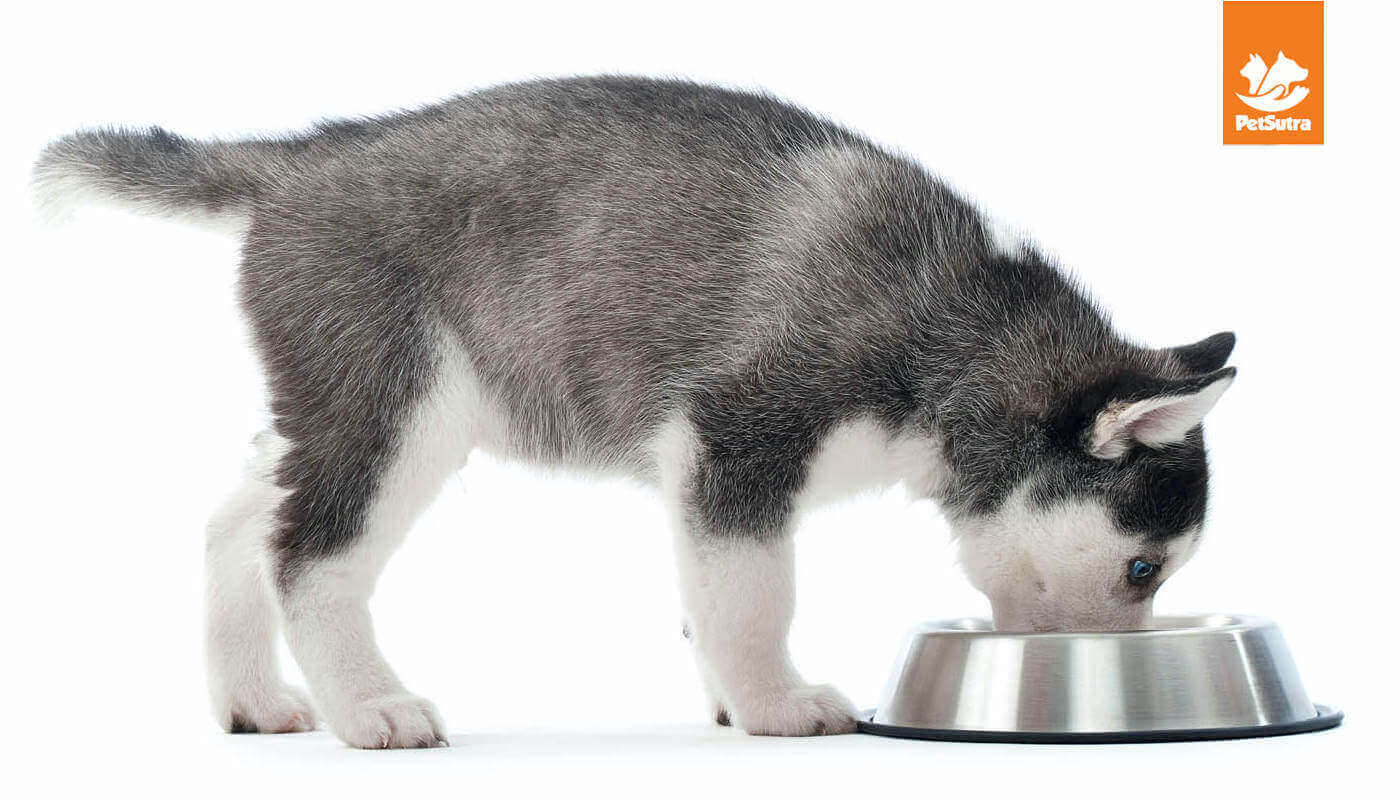 Choosing The Right Dog Food According To Age