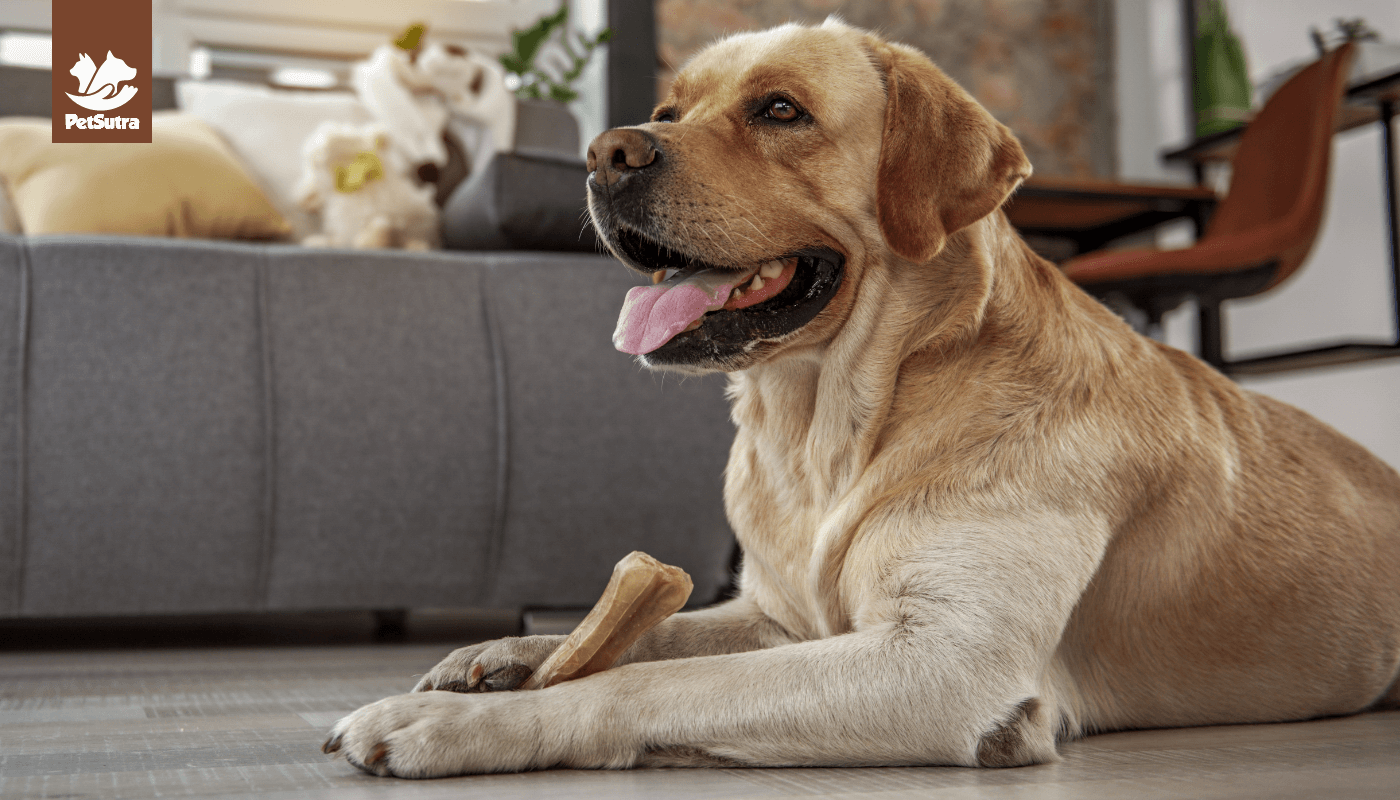 Ageing Dogs' Diet & Their Nutritional Needs!