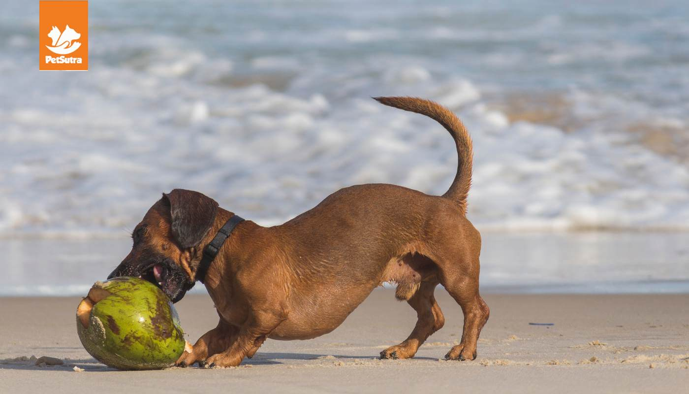 10 Best Products for Your Dog This Summer