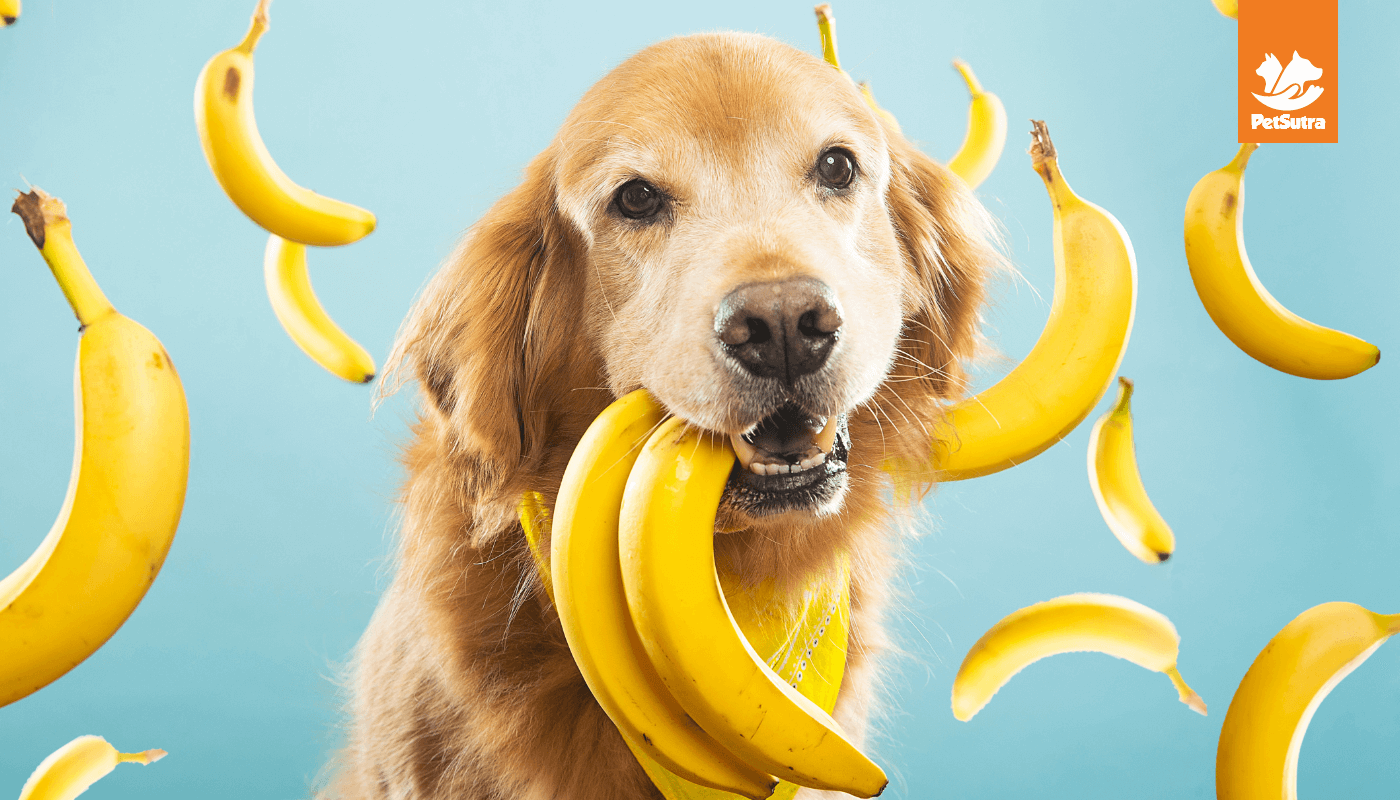 Consider Adding These 7 Veg Dog Food To Your Pooch's Diet