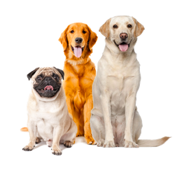 Dogs Products on PetSutra
